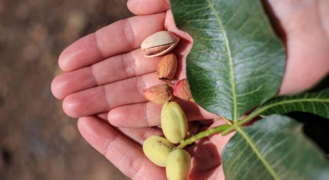Avete mai sognato di adottare… un pistacchio? Adesso è possibile!