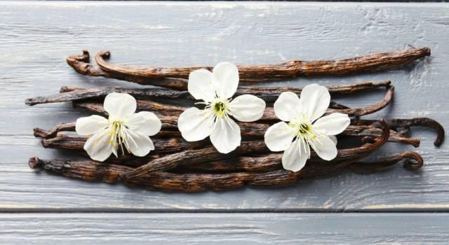 Bacca di vaniglia: come usarla e come riciclarla?