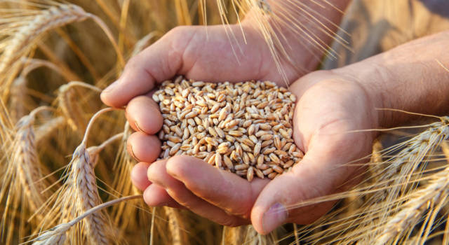 Insetti della farina: tutti i trucchi per eliminarli