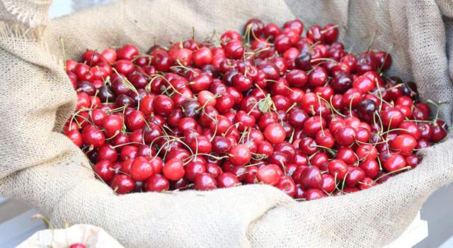 Tipi di ciliegie: le dieci migliori varianti in Italia